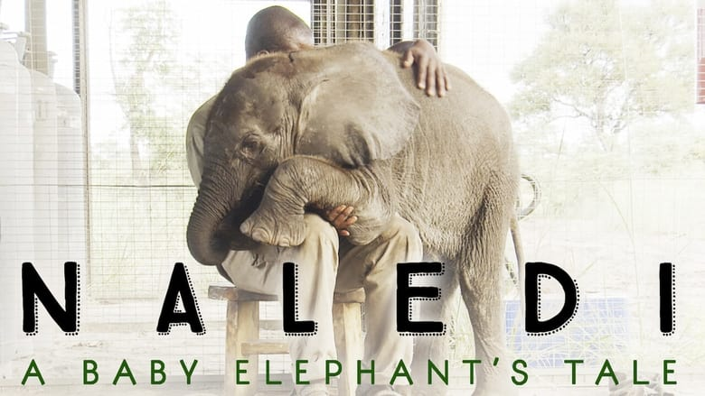 فيلم Naledi: A Baby Elephant's Tale 2016 مترجم اونلاين