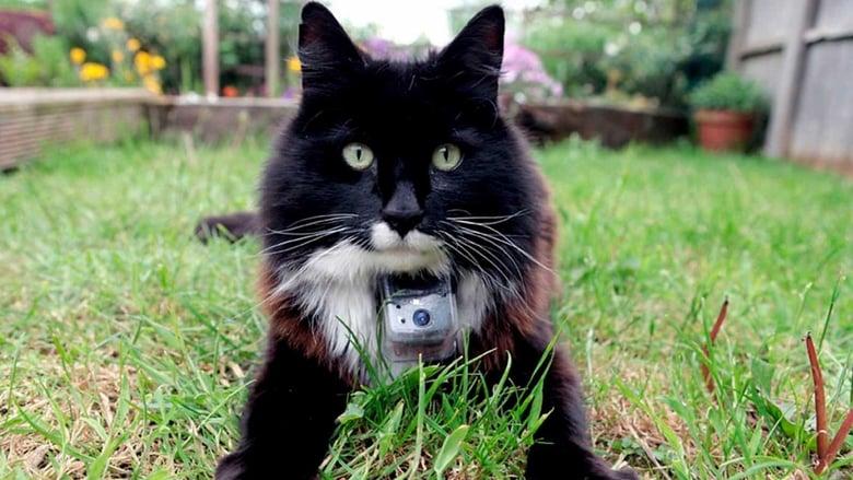 Film A macskák titkos élete Ingyenes Online