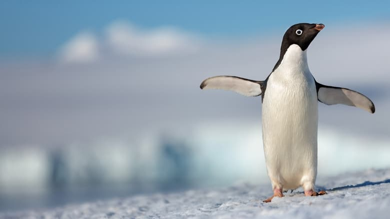 Watch Penguins free