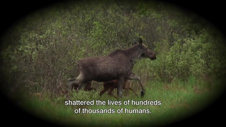 Nature Fights Back In Chernobyl