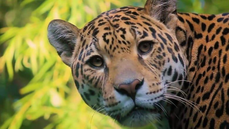 72 Dangerous Animals: Latin America Sezonul 1 Episodul 1 Online Subtitrat FSonline