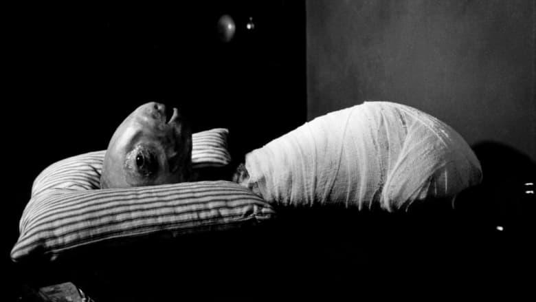 Eraserhead+-+La+mente+che+cancella