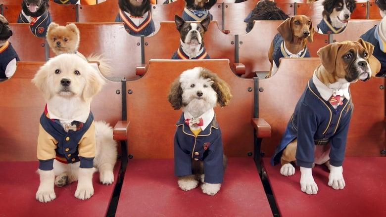 Pup Academy Sezonul 1 Episodul 1 Online Subtitrat FSonline