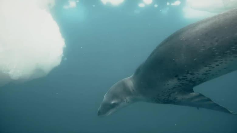 72 Dangerous Animals: Latin America Sezonul 1 Episodul 7 Online Subtitrat FSonline