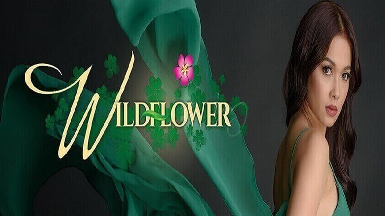 Wildflower January 31, 2018