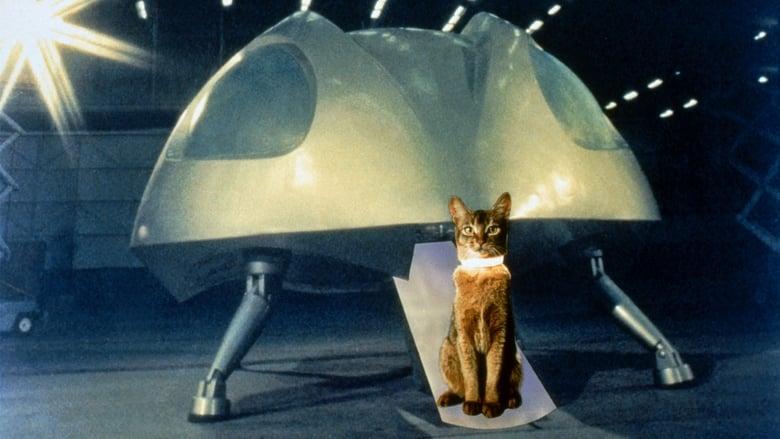 Il+gatto+venuto+dallo+spazio
