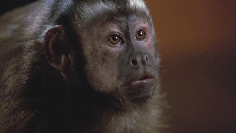Monkey+Shines+-+Esperimento+nel+terrore