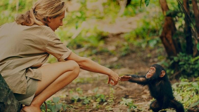 Jane: a Mãe dos Chimpanzés Dublado/Legendado Online