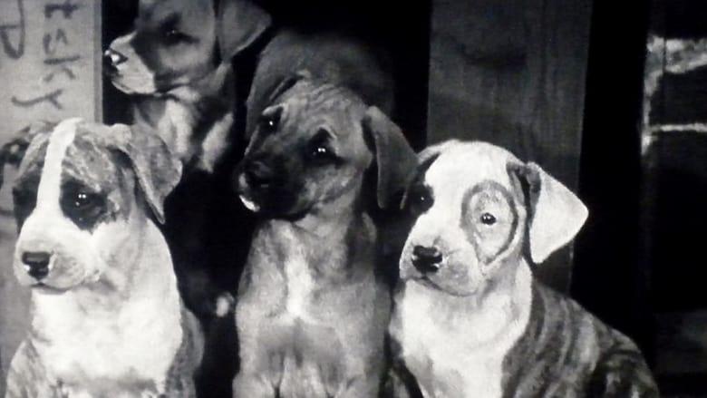 Film Pups Is Pups Con Sottotitoli