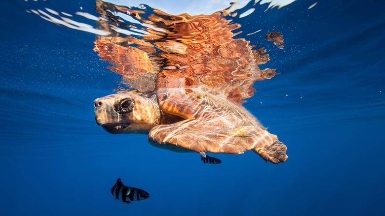 Töltse Die Kanarischen Inseln Jó Minőségű Ingyen