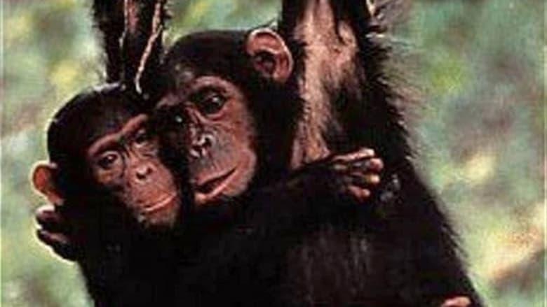 Watch Among the Wild Chimpanzees free