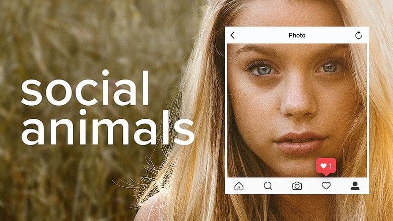Social+Animals