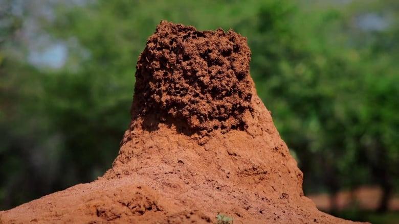 Watch Termites: The Inner Sanctum Full Movie Online Free HD