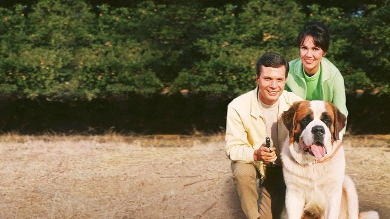Bernardo+cane+ladro+e+bugiardo