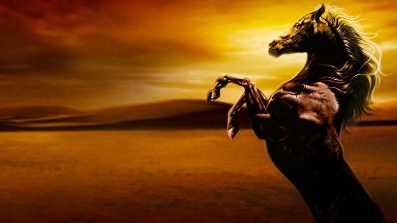 Young+Black+Stallion