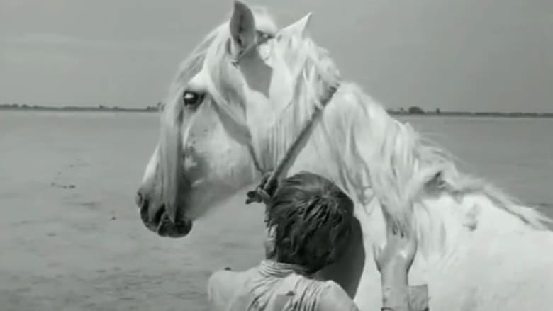 Voir Crin blanc: Le cheval sauvage streaming complet et gratuit sur streamizseries - Films streaming