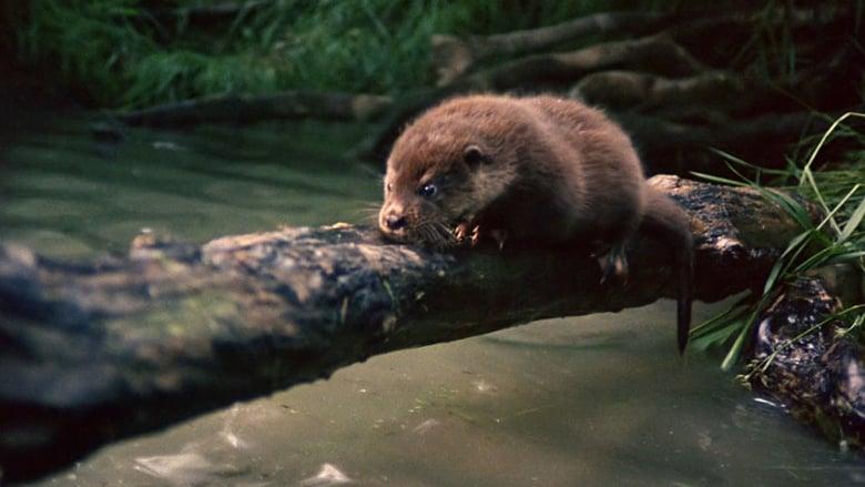 Film Tarka the Otter Magyar Felirattal