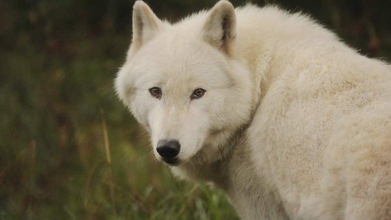Assistir Filme The Trouble with Wolves Com Legendas On-Line