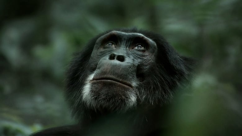 Watch Rise of the Warrior Apes Putlocker Movies