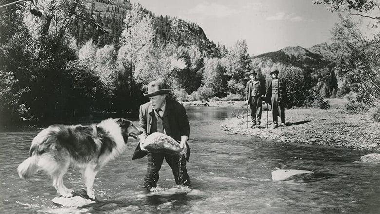 Le Maître de Lassie mystream