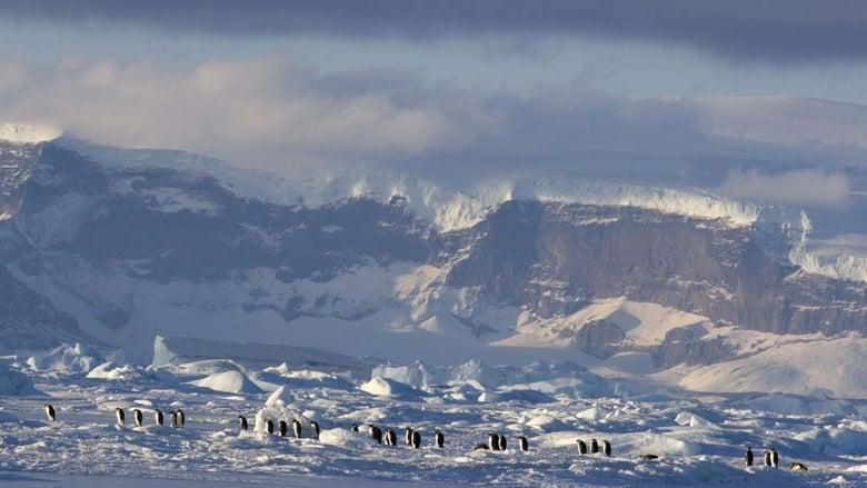 La+marcia+dei+pinguini+-+Il+richiamo