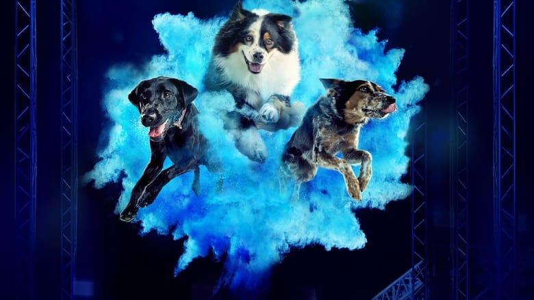 مشاهدة مسلسل America's Top Dog مترجم أون لاين بجودة عالية