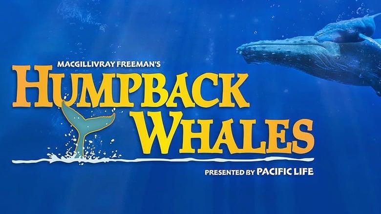 مشاهدة فيلم Humpback Whales 2015 مترجم أون لاين بجودة عالية