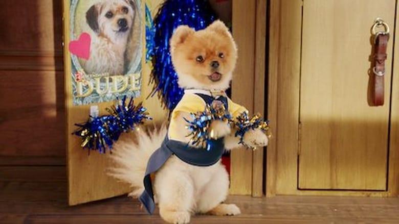 Pup Academy Sezonul 1 Episodul 5 Online Subtitrat FSonline