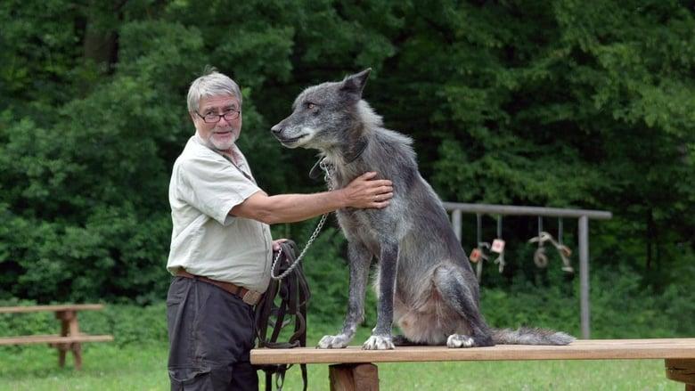 Wolves Return