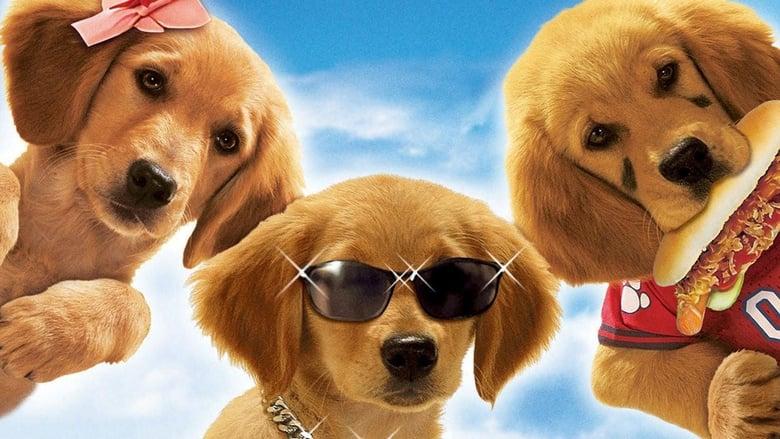 Air+Buddies+-+Cuccioli+alla+riscossa