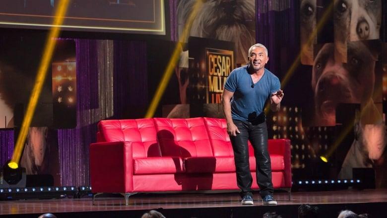 Assistir Cesar Millan: Viva Las Vegas! Completamente Grátis