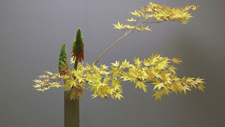 Guarda Ikebana In Buona Qualità Hd 1080p