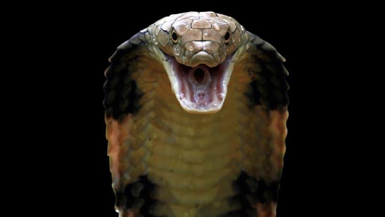 Killer Snakes (2021)