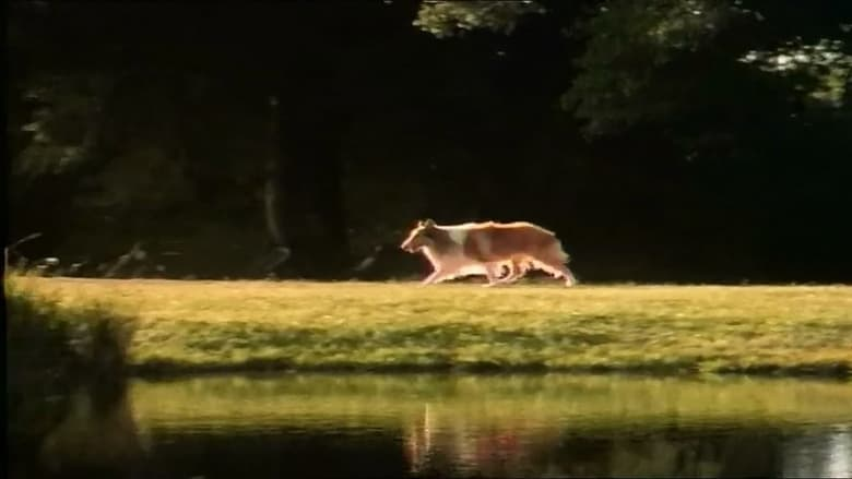 Watch The Magic of Lassie free