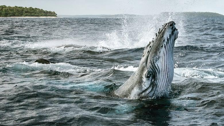 مشاهدة مسلسل Secrets of the Whales مترجم أون لاين بجودة عالية