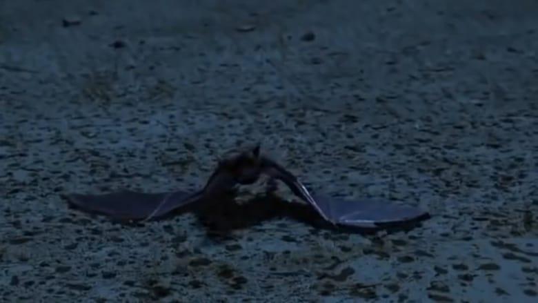 Bats+2