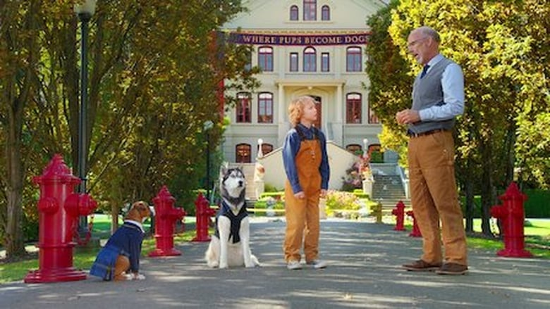 Pup Academy Sezonul 1 Episodul 12 Online Subtitrat FSonline