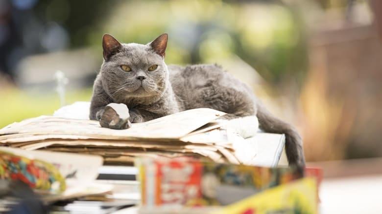 Il+mistero+del+gatto+trafitto