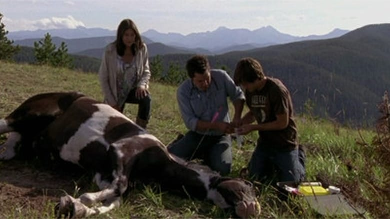 Heartland Season 3 Episode 9