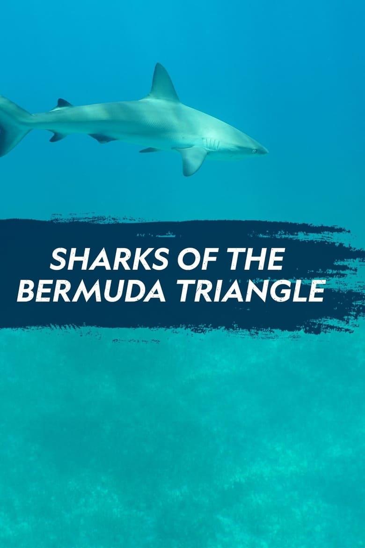 Sharks of the Bermuda Triangle