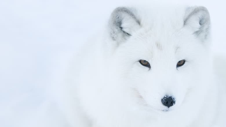 Película Life In The Snow En Buena Calidad Hd