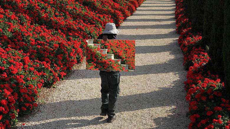 The+Gardener