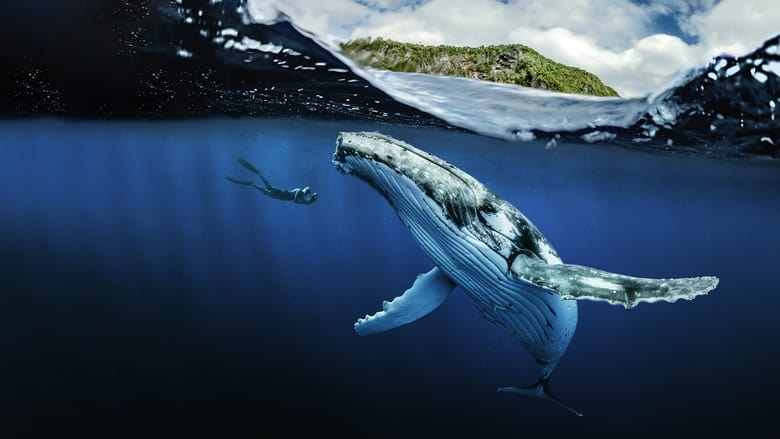 مشاهدة مسلسل Chasing Ocean Giants مترجم أون لاين بجودة عالية