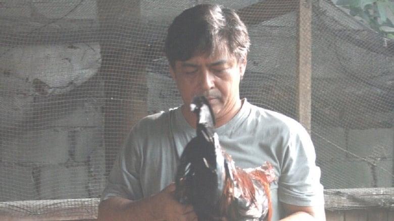 Sabungero