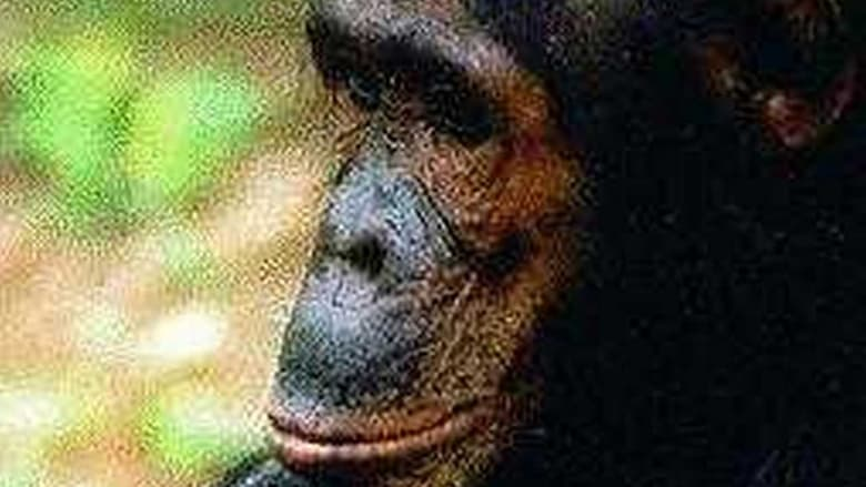 Film People of the Forest: The Chimps of Gombe Kostenlos