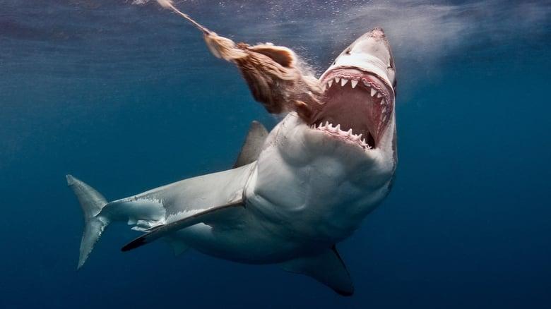 Film The Search for the Ocean's Super Predator Feliratokkal