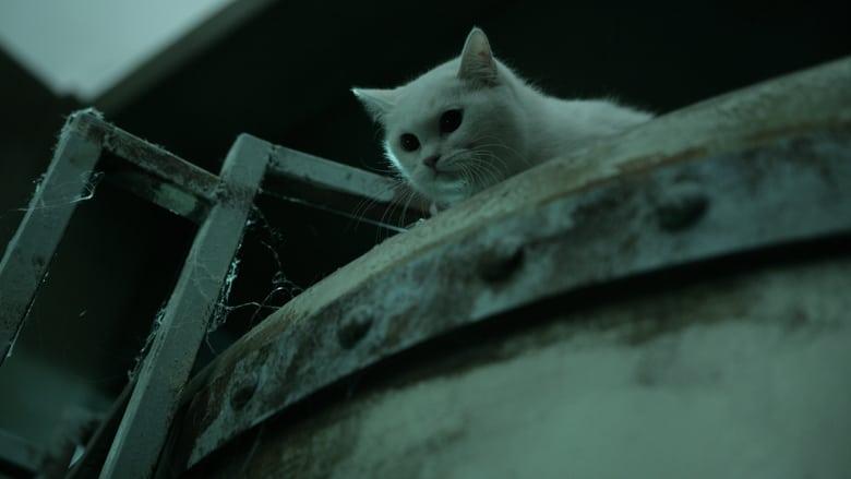 Voir The Cat, Les Griffes De L'enfer en streaming vf gratuit sur StreamizSeries.com site special Films streaming