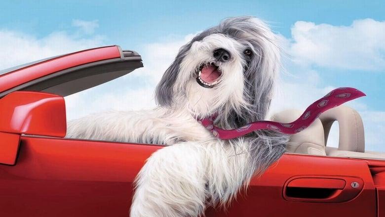 Imagem do Filme Soltando os Cachorros