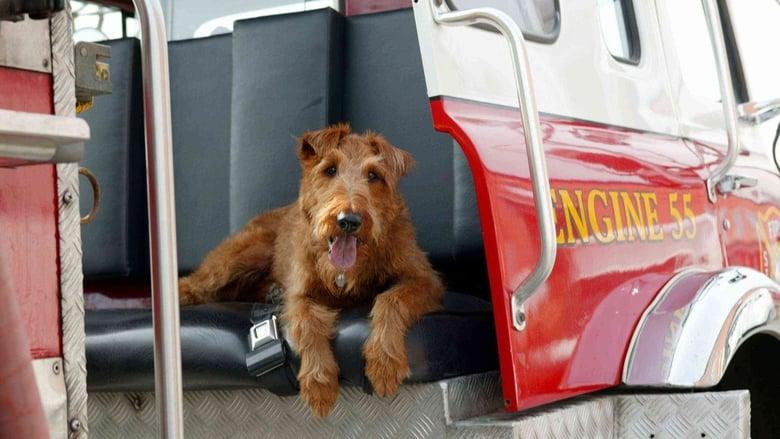 Il+cane+pompiere