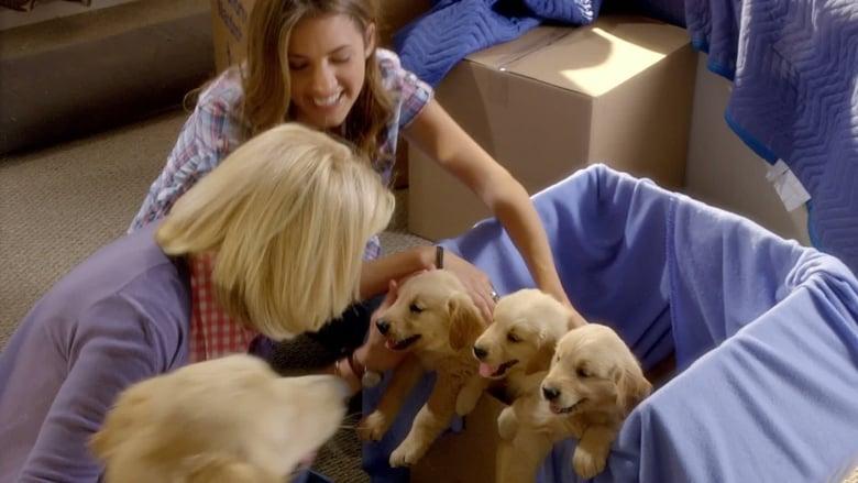 Tre+cuccioli+e+un+anello